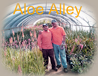 Family Owned And Operated Green Desert Nursery Has Been Serving The Coachella Valley For Over Two Decades Visit Us You Will Reciate Difference